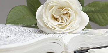 Bible and the white rose
